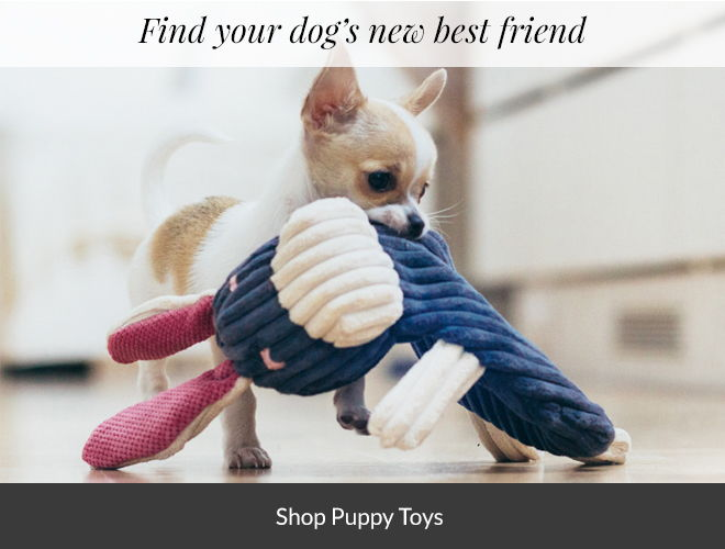 Shop Puppy Toys