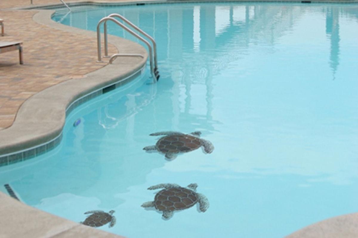 TLOBROL - Loggerhead Turtle Brown Pool Mosaic 2