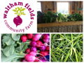 June CSA Share from Waltham Fields Community Farm