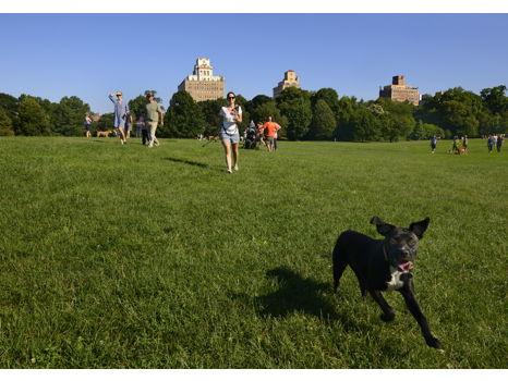 Donate $50: Keep the Long Meadow Green