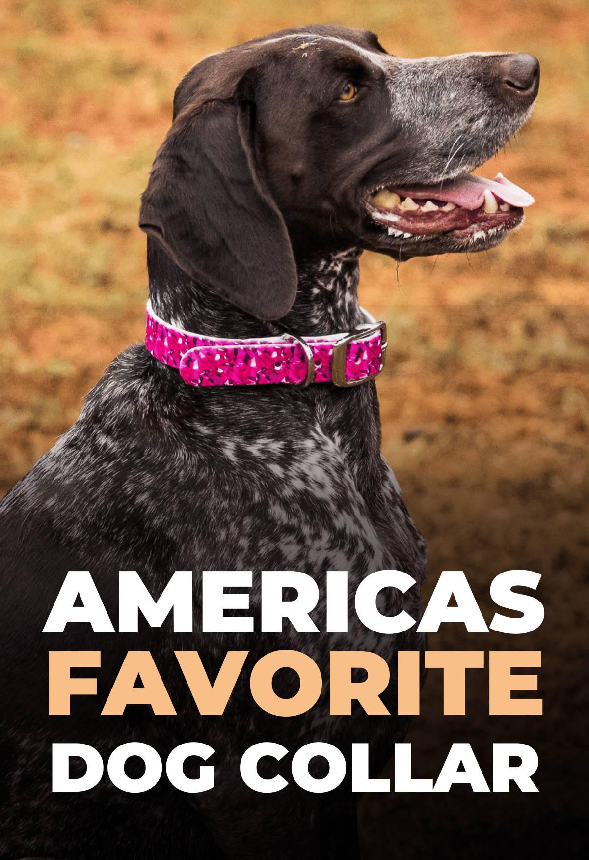 Black color dog in amerias favorite collar c4