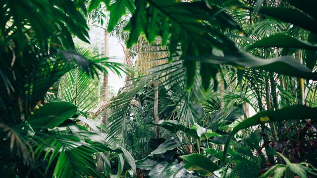 Et billede af en jungle, som altså meget bogstavligt henviser til at det kan være en jungle at finde ud af hvad derivater egentlig er for noget
