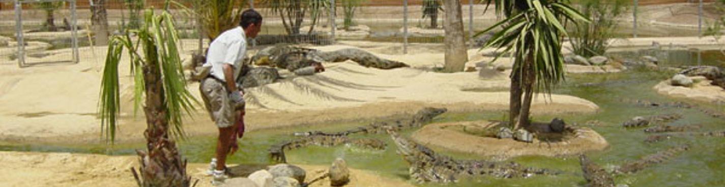Посещение крокодиловой фермы, парка бабочек и аквапарка на Коста Дель Соль