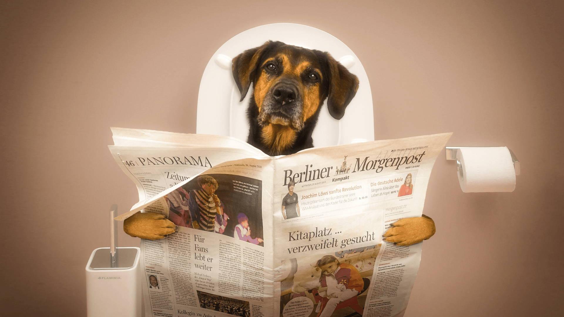 Der Hund Hat Durchfall 5 Tipps Schonkost Rezept