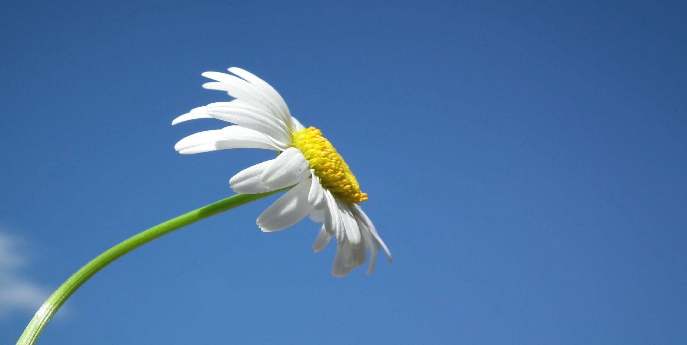Wiltija Spring Collection Logo