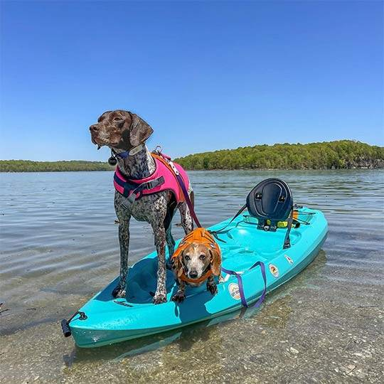 2 dogs on a small turquoise kayak
