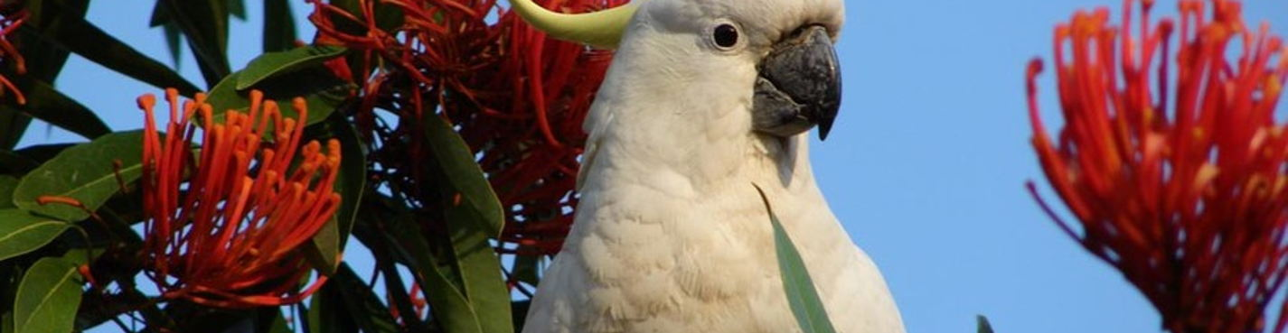 Экскурсия в Джунгли попугаев в Майами