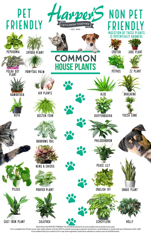 pet safe house plants