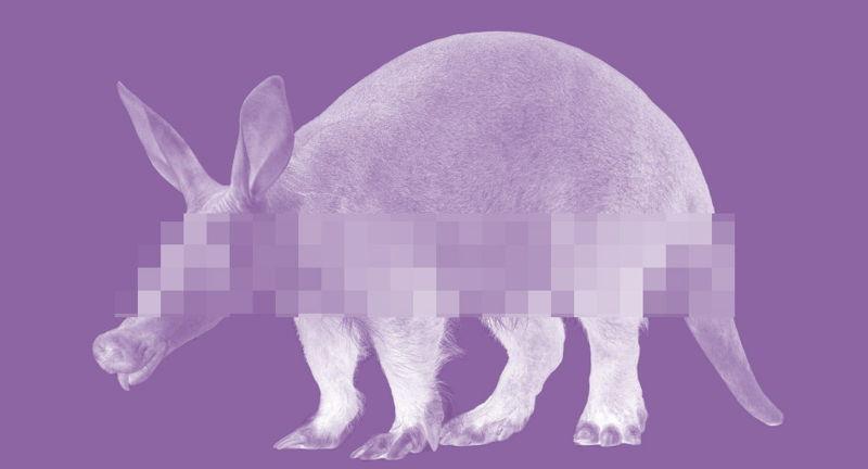 Secret Aardvark Jan 31 Willamette Week