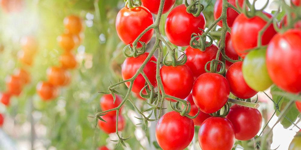 MAS-Brand-being-Greenco-Tommies-Tomatjes-3.jpg