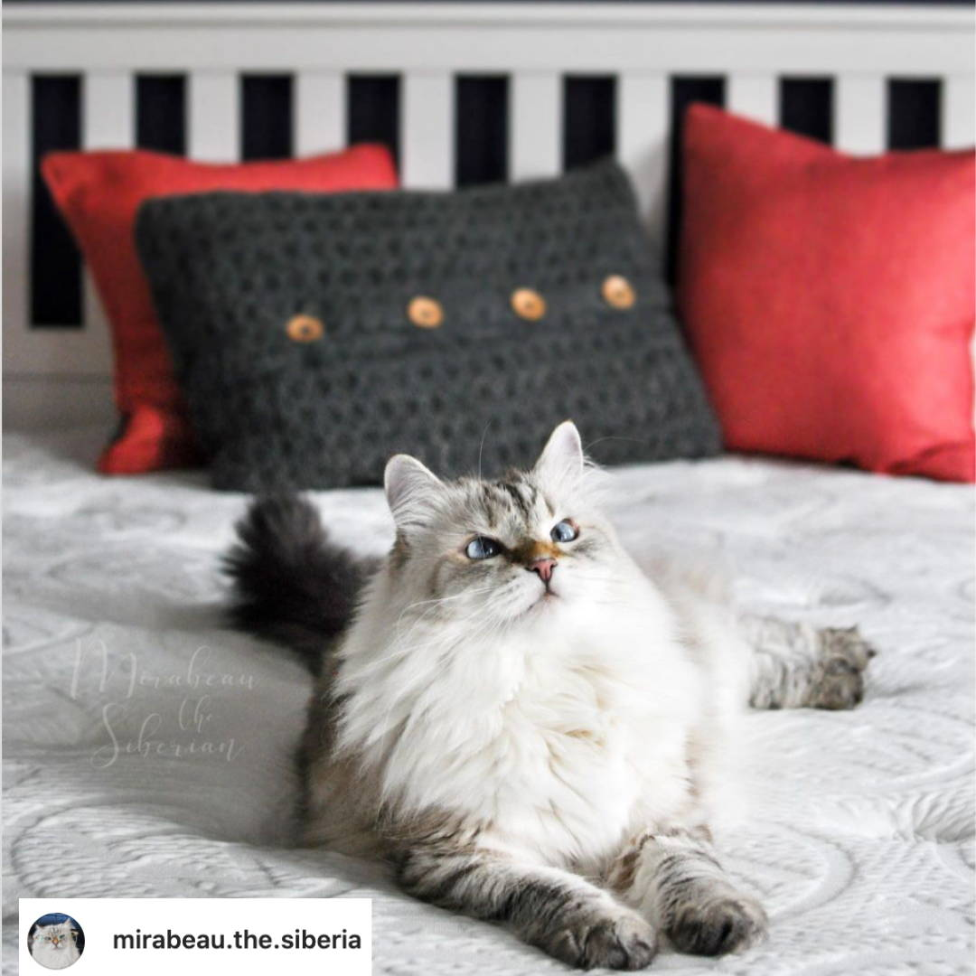 Mirabeau The Siberia on a Haven Mattress On Instagram