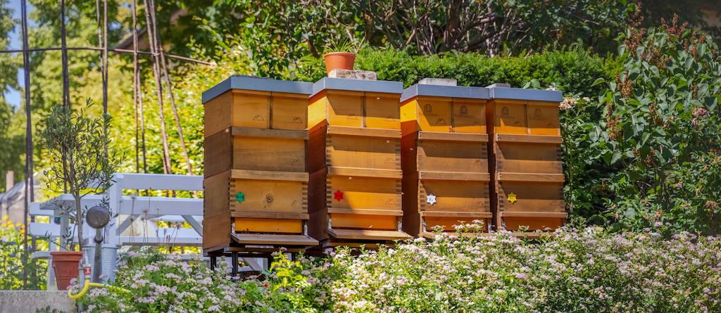 Vier Bienenvölker des Standortes der Imkerei Fließgold in Berlin Hermsdorf. Die Völker haben bereits Honigräume, die Sonne scheint.