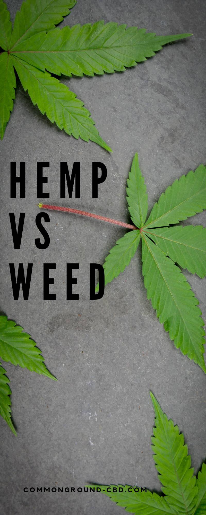 Hemp vs Weed