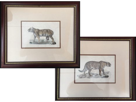 2 prints (tiger and jaguar) 5 x 7 framed to 19 x 16