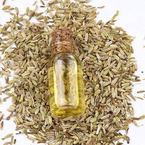 Fennel Essential Oil - Bulk Wholesale