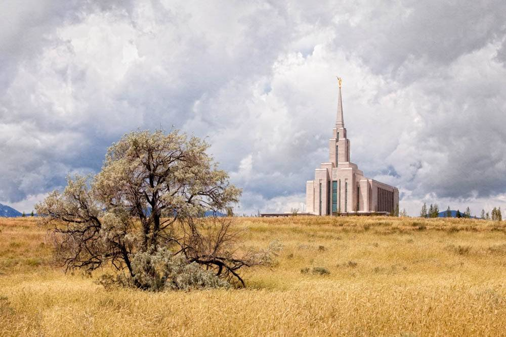 LDS art panoramic photo of the Oquirrh Mountain Temple in an autumn field with a tree.