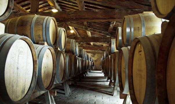 Вино и сыр made in Pisa