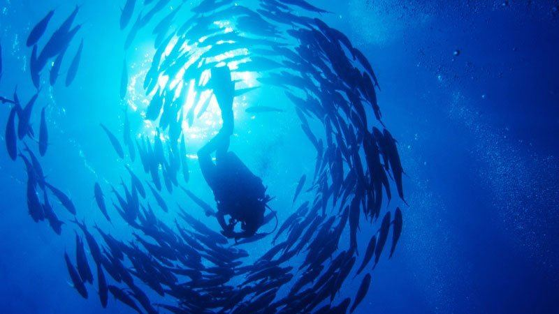 Diver among the fish, Red Sea, Egypt