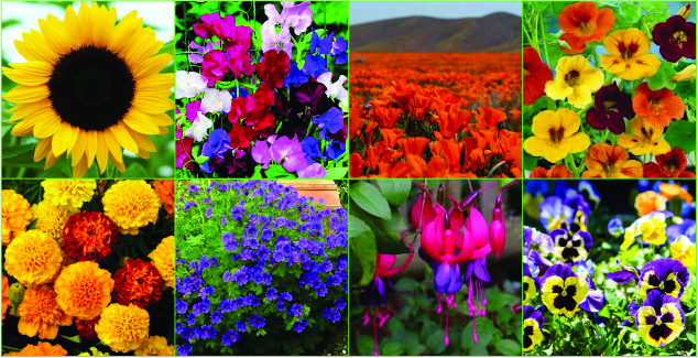Cape Town - 8 Easy flowering plants for beginners.jpg