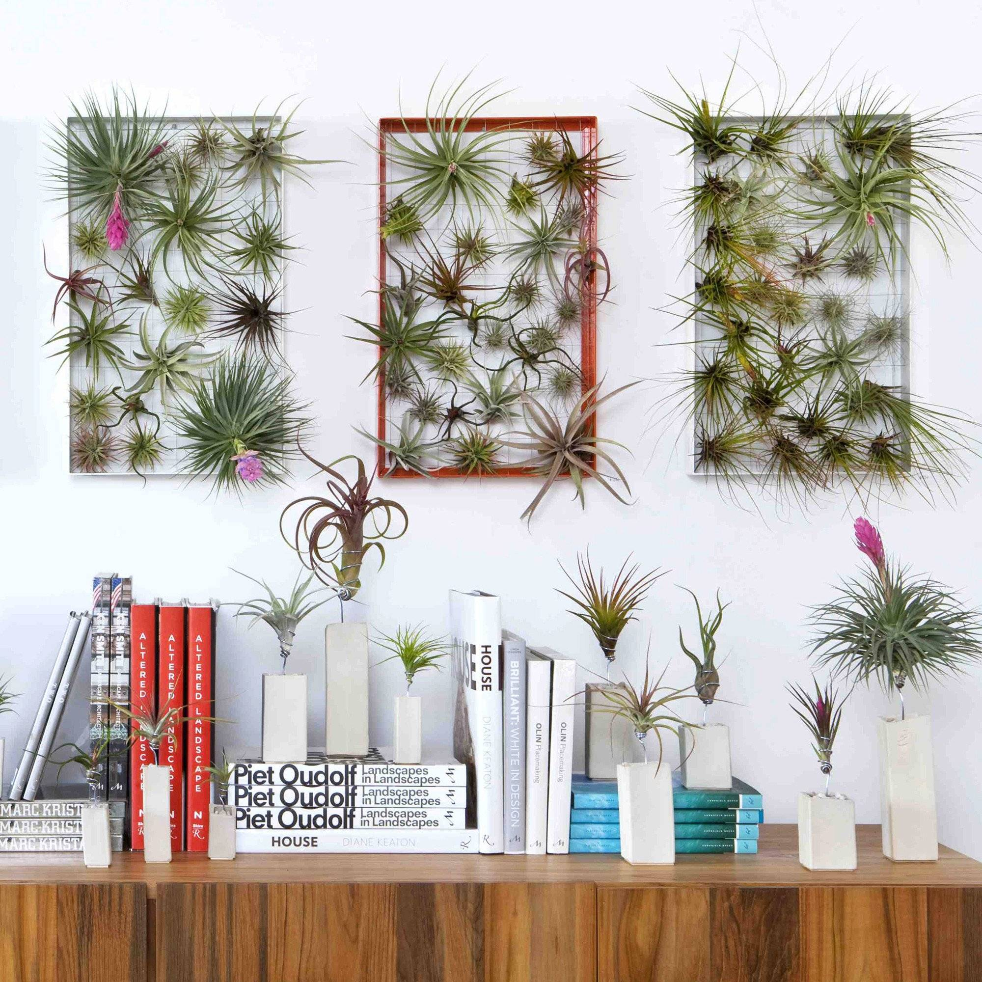 airplant wall holder airplantman frame