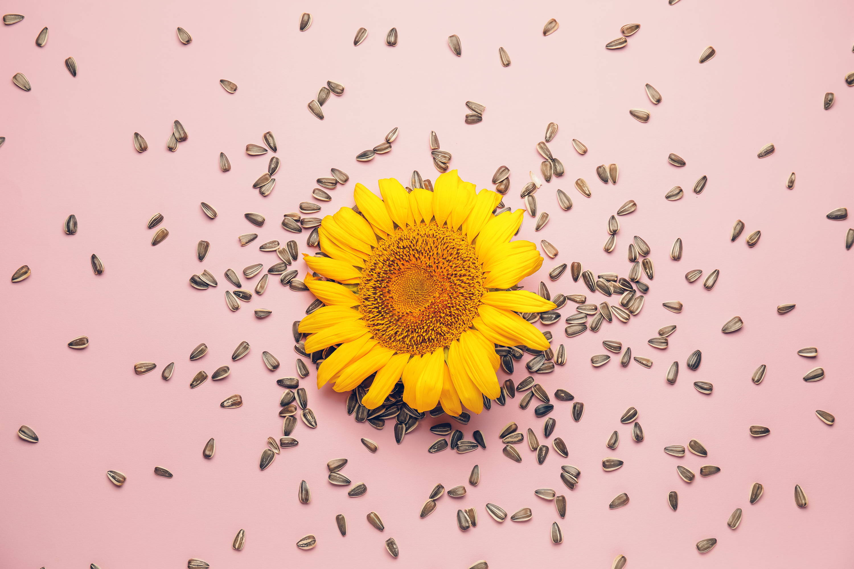 Sunflowers to build collagen