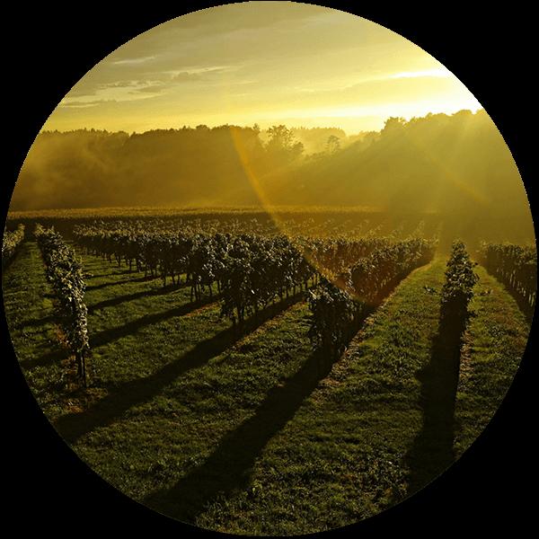 Weingut Trummer Grundpfeiler 1: Weingarten