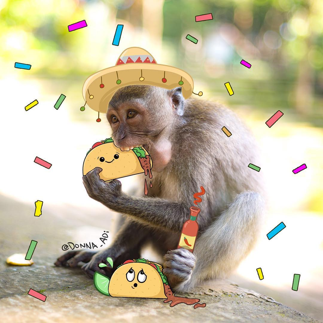 Bali monkey eating taco by Donna Adi