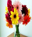 BF Spring Gerbera Bouquet