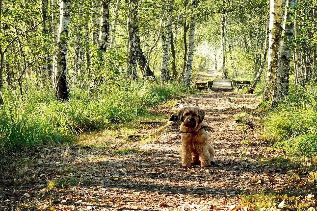 Spiele beim Spazierengehen mit Hund