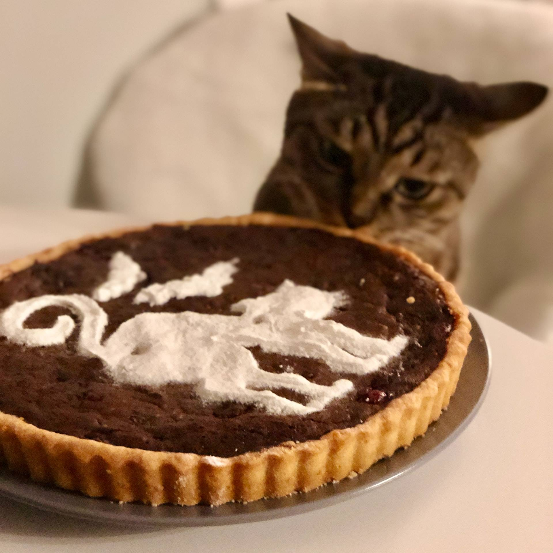 Cat looking at a pie