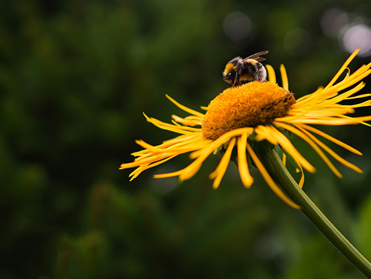 Puigcerdà - Create a bee friendly garden at home with our guide to attracting pollinators.