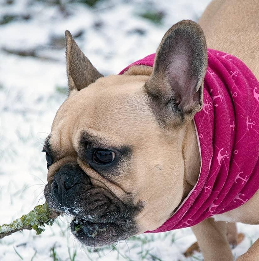Loop-Schals und Schal für Hunde