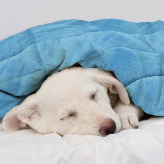 Smooth minky weighted blanket for a large dog