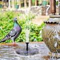 fontaine solaire originale