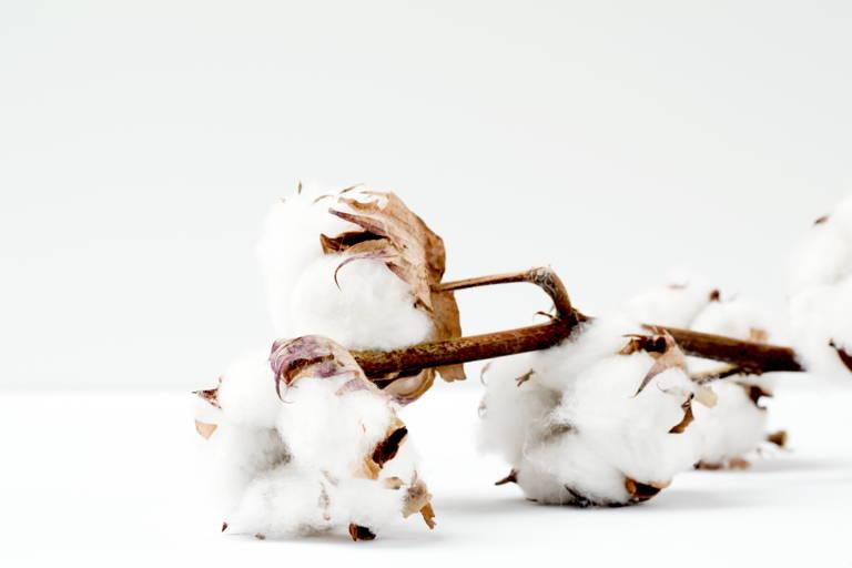 Baumwolle in ihrer natürlichen Form