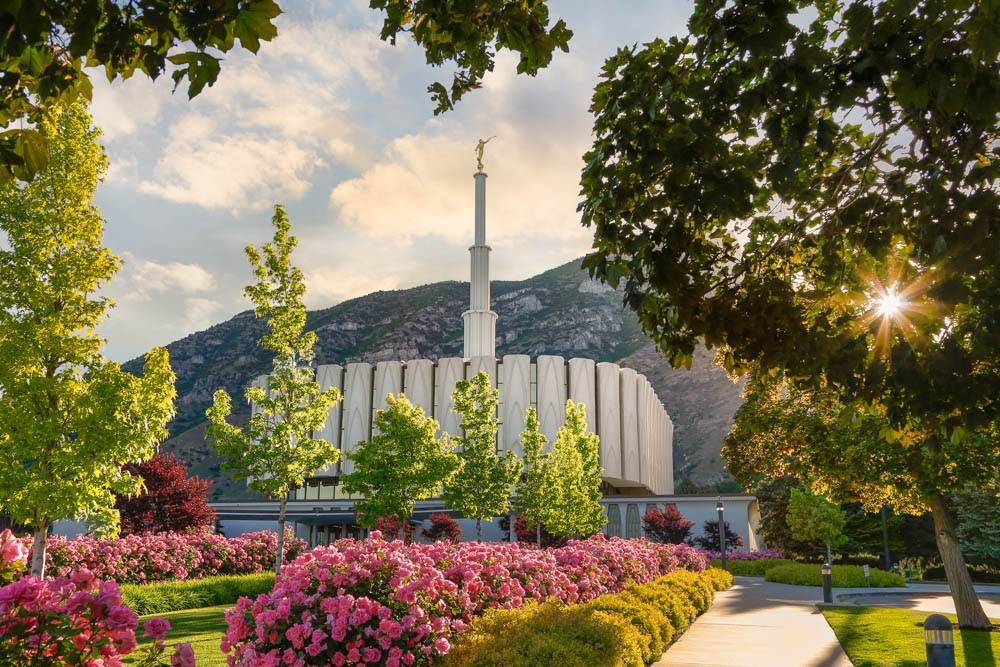 Pathway leading up to the Provo Temple lined with pink rose bushes.