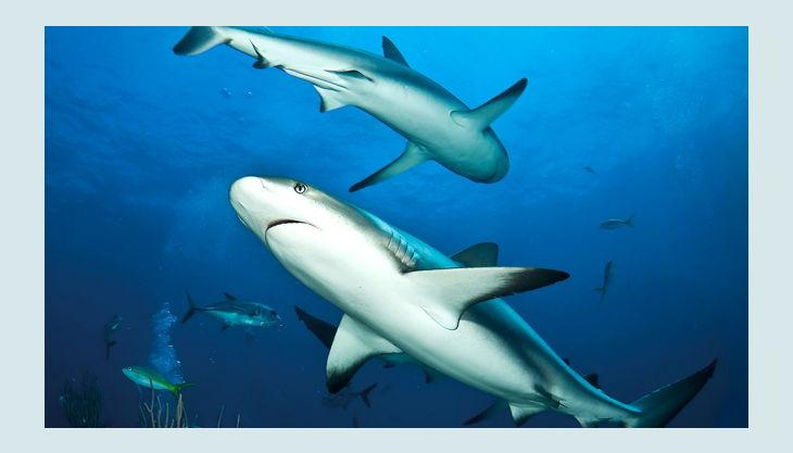 zoologischer garten berlin haie