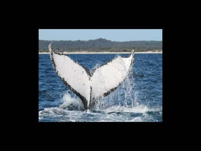 Avistamiento de Ballenas-