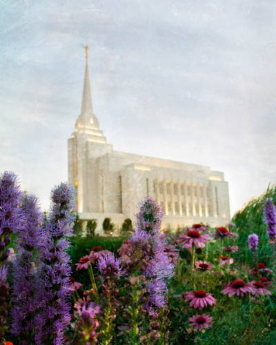 Painting of the Rexburg Temple surrounded by green grass and purple flowers.