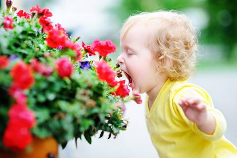 Curly hair toddler girl smelling red flowers stock photo Europe, Flower, 12-17 Months, Activity, Baby - Human Age