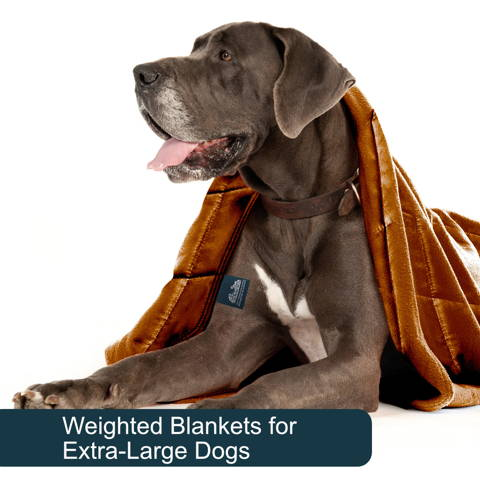 Weighted blankets for extra-large dogs