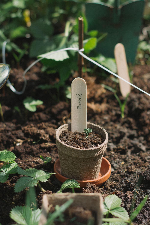 Thisispaper_Gardening_19.jpg