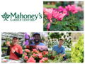 Mahoney's Garden Center - $50 Gift Card
