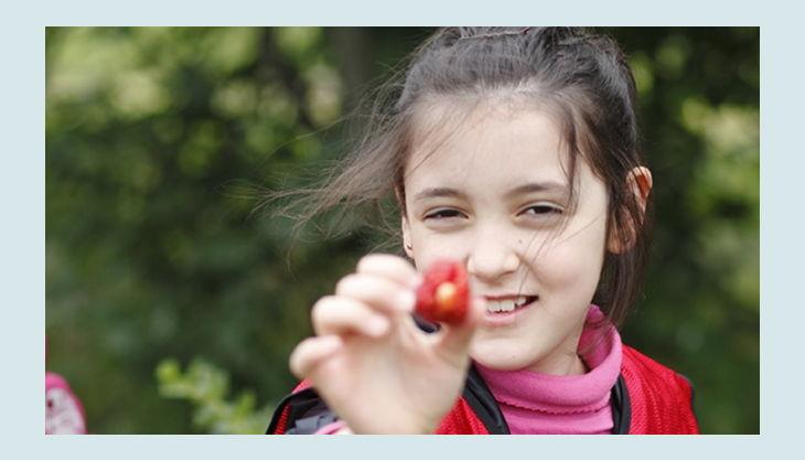 stiftung domäne dahlem erdbeeren sammeln