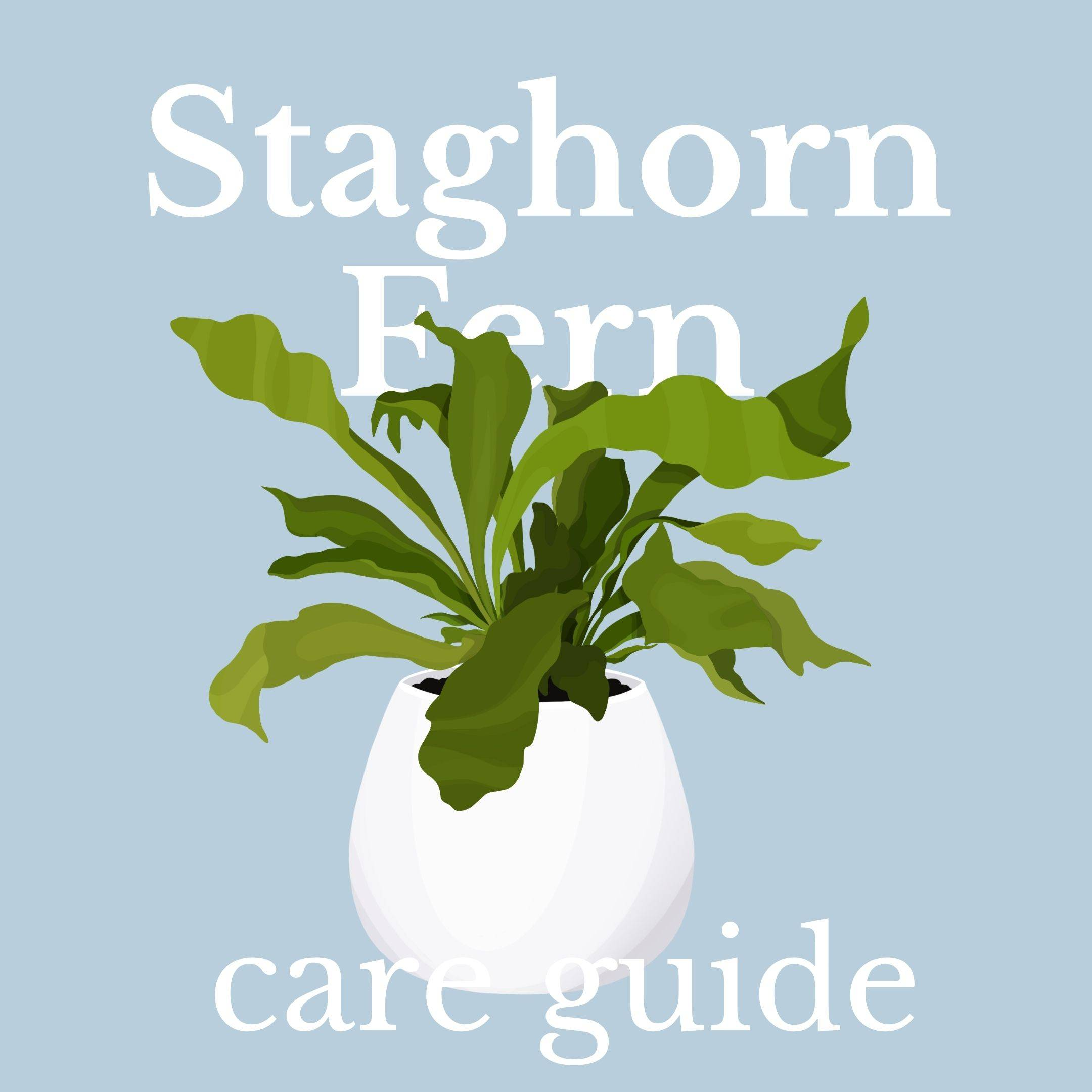 Drawing of staghorn fern