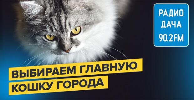 «Радио Дача» в Казани выбирает Главную кошку города - Новости радио OnAir.ru