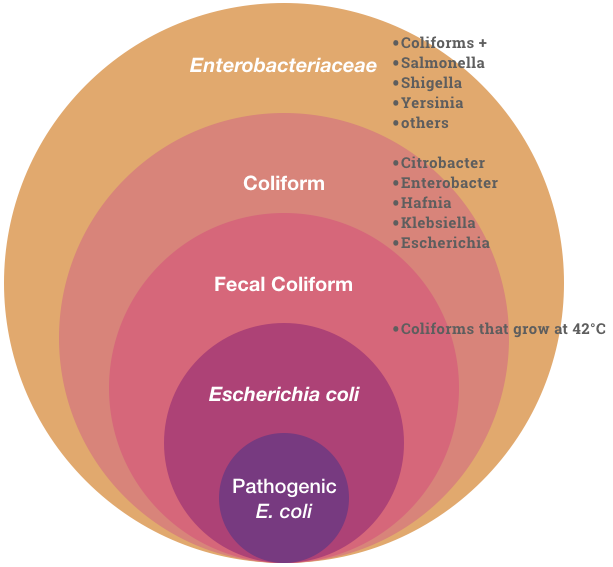 Graphic showing the different types of microorganism