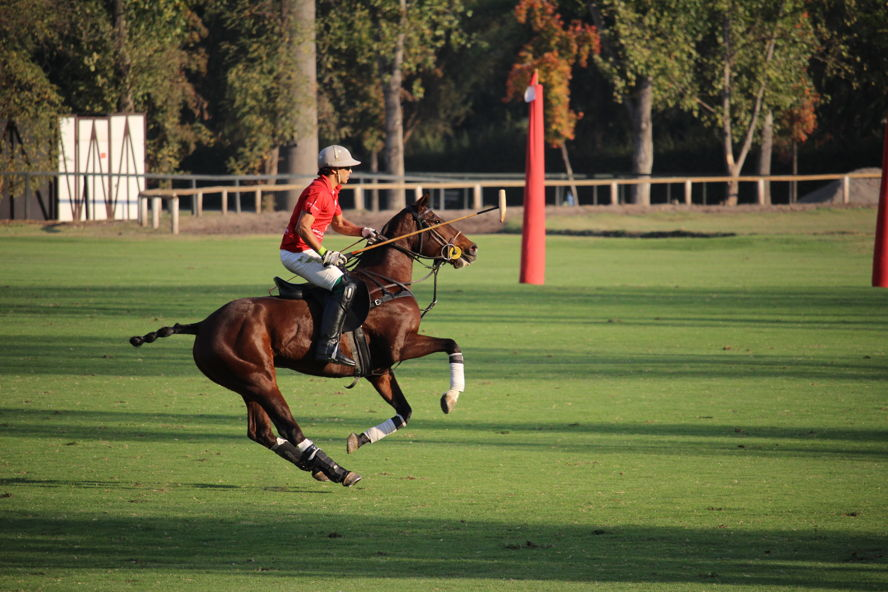 Santiago - Engel Volkers Polo Team