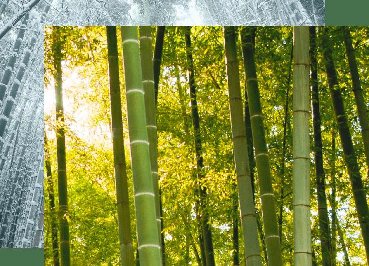 Bamboe in de zomer en bamboe in de winter