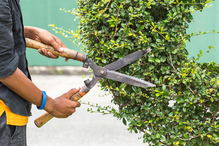 Landscaping Your Loan at Bay Equity